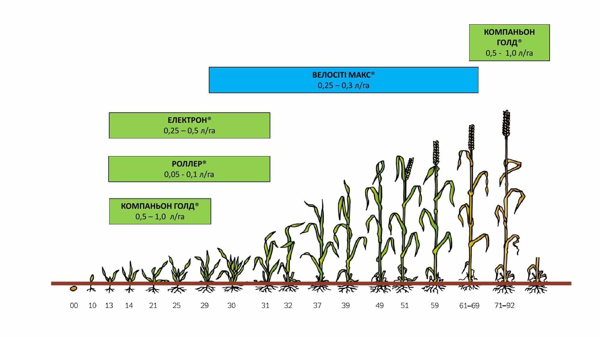 discovery-cropcard-spring-cereals
