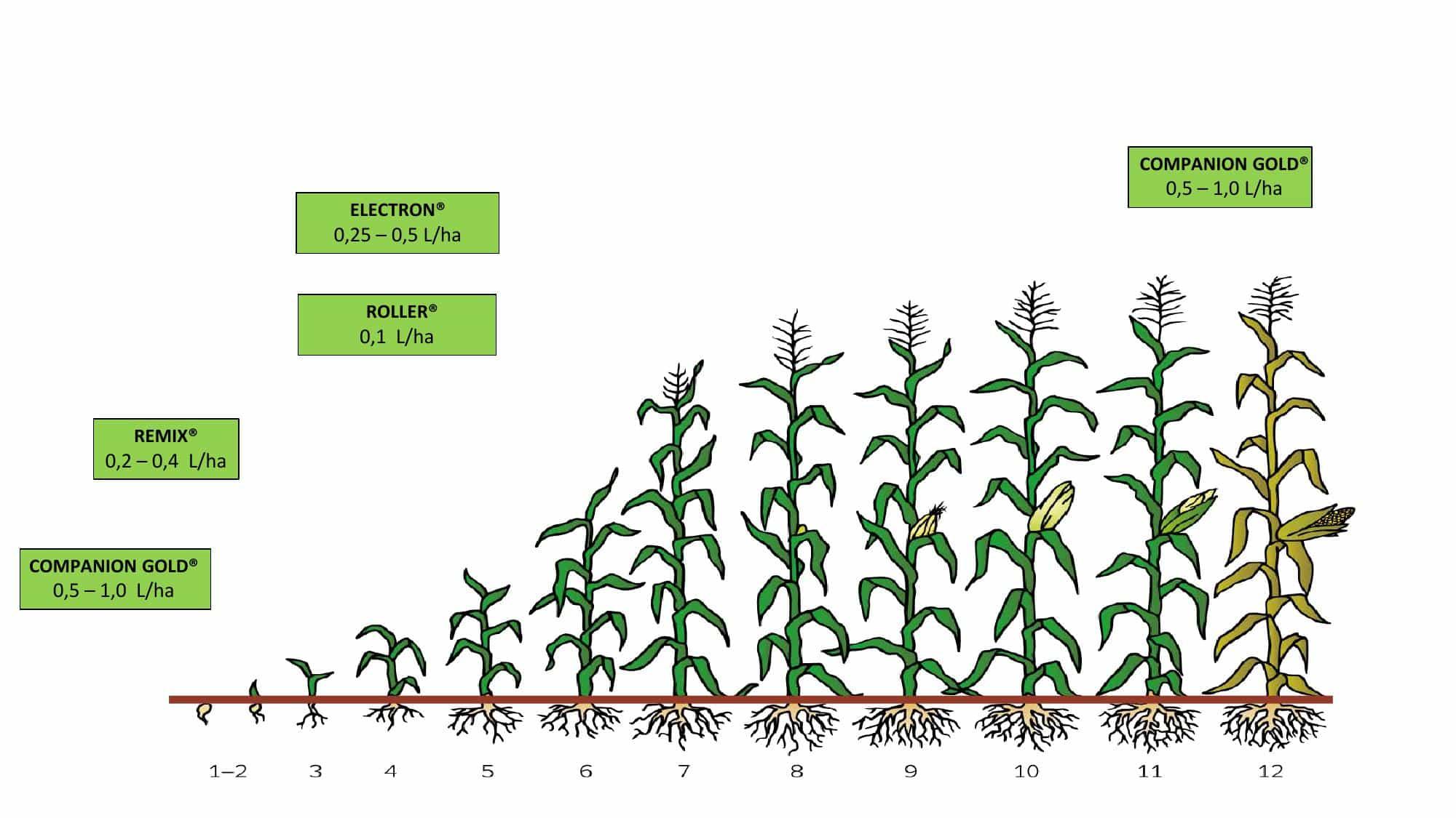 discovery-cropcard-english-corn